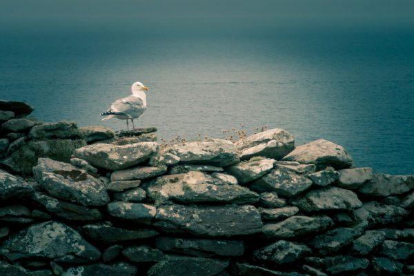 راز خلاقیت و رهایی از دام تکرار